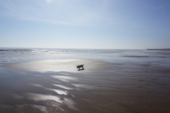 Miles and Miles of Dog-friendly Beach