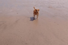 Dogs Welcome on the Beach